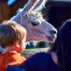 Roba Family Farms - Things to Do - Family Fun - DiscoverNEPA